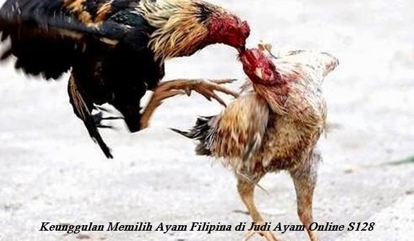 Keunggulan Memilih Ayam Filipina di Judi Ayam Online S128